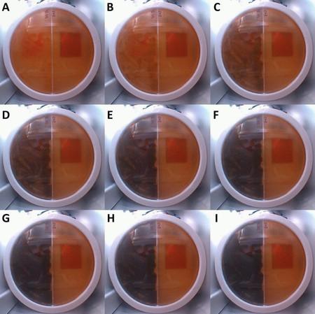 Placa Petri