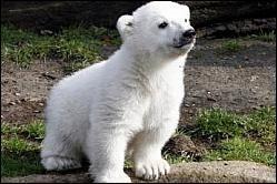 Knut: La Biografía