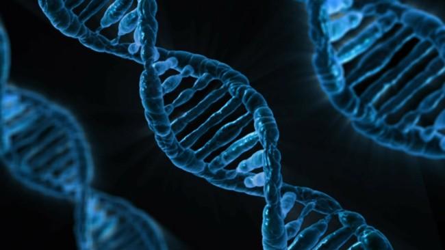 Muestras de ADN compartidas en webs de genealogía permiten encontrar a un presunto violador y asesino en serie 40 años después