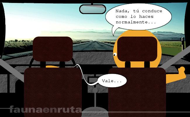 fauna en ruta: examen de conducir