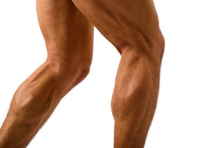 Nombre musculos piernas y fotos