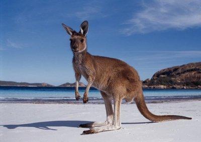 Un puñado de cosas que no sabías sobre Australia: arañas desconocidas, explosiones nucleares y gigantescas reservas de oro