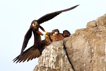 R Alberto Fantoni Wildlife Photographer Of The Year