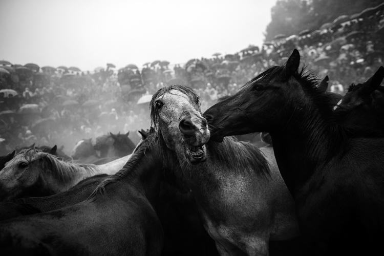 Foto de Daniel Rodrigues (8/11)