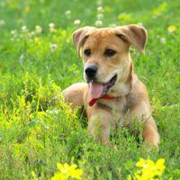 Comienzan a probar un droga que podría alargar la vida de los perros