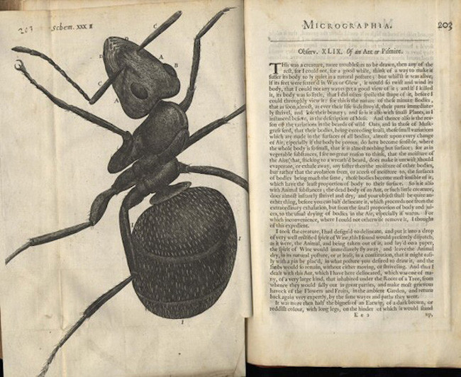 Illustrations Robert Hooke Micrographia1