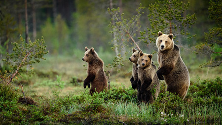 Bjorn Stuedal Wildlife