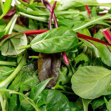 Siete consejos para conservar las ensaladas de bolsa y que aguanten frescas más tiempo