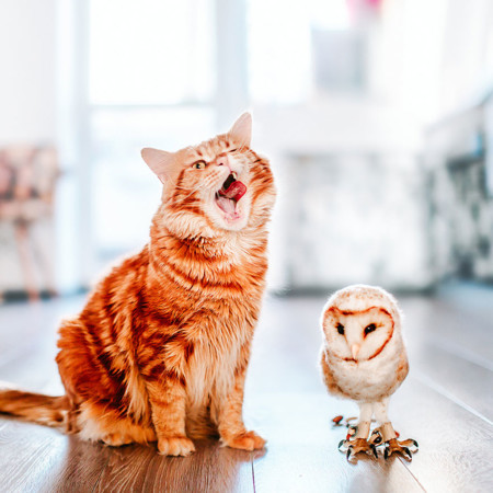 Ginger Cat Photography Kotleta Cutlet Kristina Makeeva Hobopeeba 51