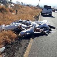 ¿Por qué había 300 tiburones abandonados en una carretera de Michoacán, México?