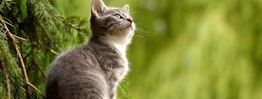 Esta nueva vacuna para gatos evita reacciones alérgicas en humanos