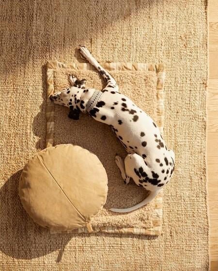 Zara Home Mascotas 5