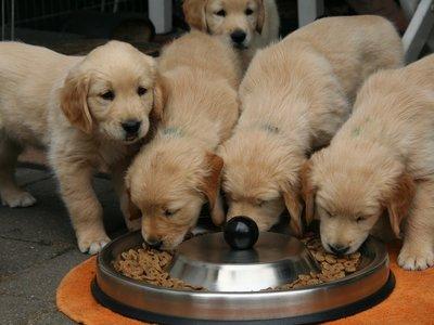 [Inocentada 2017] Bistrot Laika: inauguran el primer restaurante para perros de España