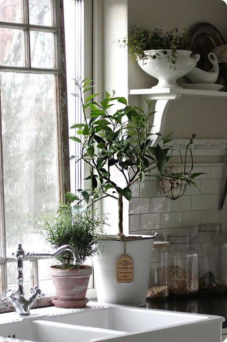 Plantas 7