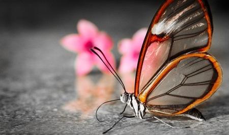 fotografias-de-insectos-34.jpg