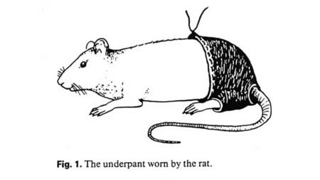 Los pantalones de poliéster reducen la fertilidad de las ratas, el IgNobel del año