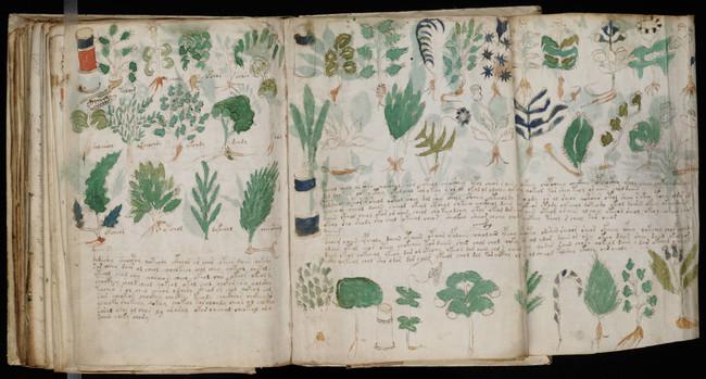 Voynich Manuscript 178
