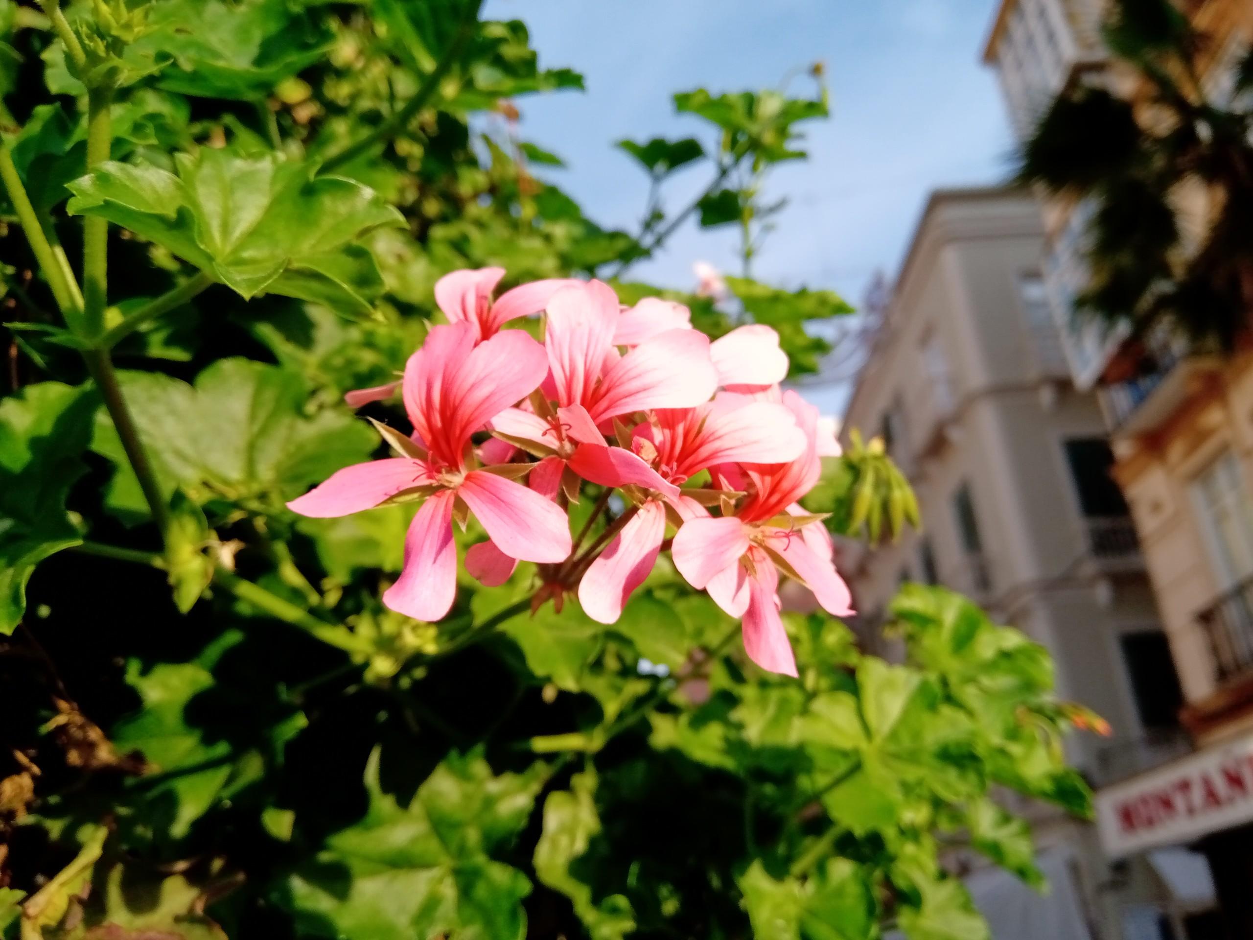 Fotos tomadas con el Nokia 3.1 Plus