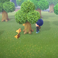 Guía Animal Crossing New Horizons: cómo conseguir tablas de madera, piedra y pepitas de hierro de forma fácil y rápida