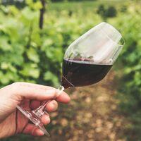 Bodeboca nos trae un cupón de envío gratuito para que podamos elegir entre miles de vinos