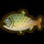 Nh Icon Stringfish