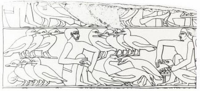 Egipcios alimentando gansos