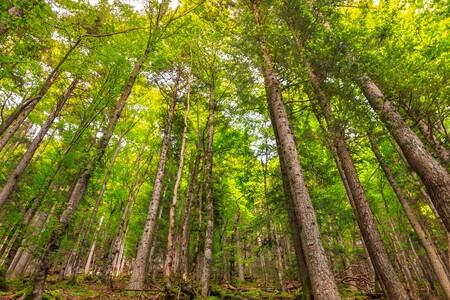 La UE plantará 3.000 millones de árboles para proteger la biodiversidad. No es una gran idea