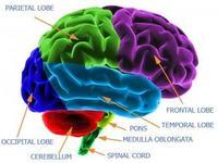 Bases biológicas del aprendizaje y la individualidad (y III)