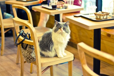 Cat Cafe Cnt 21feb13 Flickr Ceruleansky B 1080x720