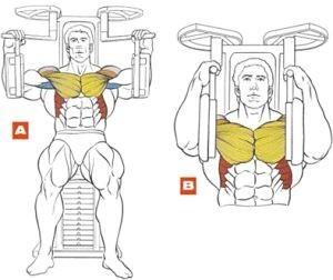 Máquinas y ejercicios de pecho I