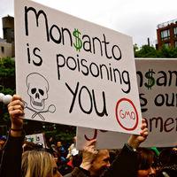 La ley no hace evidencia: lo que diga un tribunal sobre Monsanto y el glifosato no cambia la ciencia