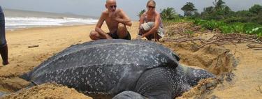 La tortuga más grande jamás encontrada pesaba casi una tonelada
