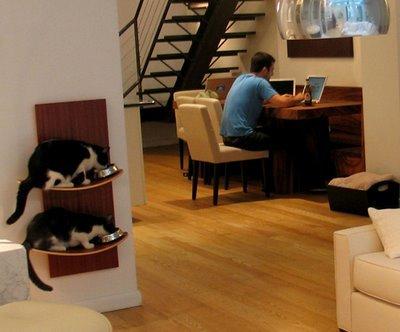 A tu gato también le gusta jugar