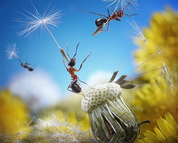 Andrey Pavlov, fotografiando el mágico mundo de las hormigas