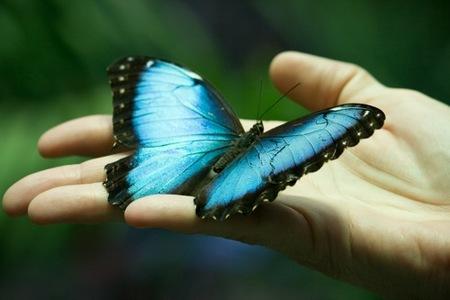 fotografias-de-insectos-33.jpg