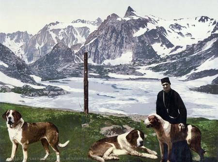 St Bernard Dogs Valais