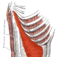Cómo localizar y activar el transverso del abdomen