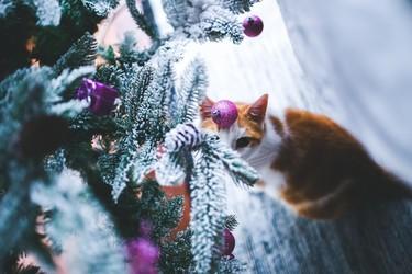 Lo mejor y lo peor de la decoración de Navidad en 13 gifs