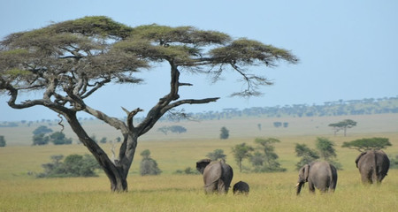Un Safari Por El Serengeti