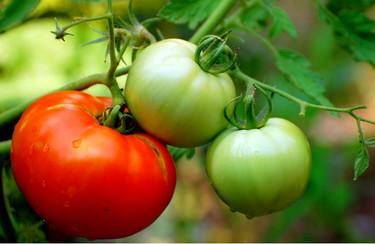 Inquietud en el sector agrario tras la entrada en vigor del Acuerdo de Libre Comercio con Marruecos