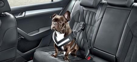 Skoda quiere que tus mascotas viajen seguras a bordo del auto