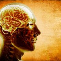 ¿Quieres cuidar tu cerebro? Evita el exceso de los siguientes nutrientes