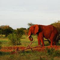 La tierra donde los elefantes son de color rojo