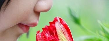 ¿Qué es la olfacción ortonasal? ¿Y la retronasal?