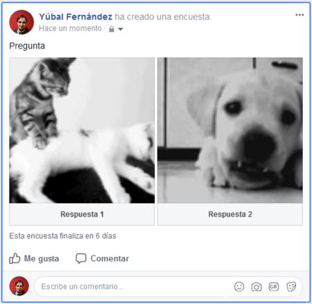 Encuesta Facebook Con Gif