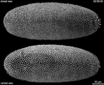 Olympus Bioscapes: las fotos microscópicas más extraordinarias