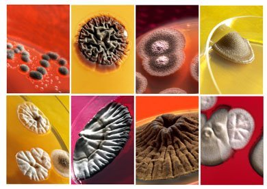 Los enemigos (y amigos) microscópicos en cifras
