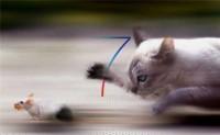 De iOS 7, jailbreaks, gatos, y ratones