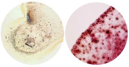 Bebidas bajo el microscopio