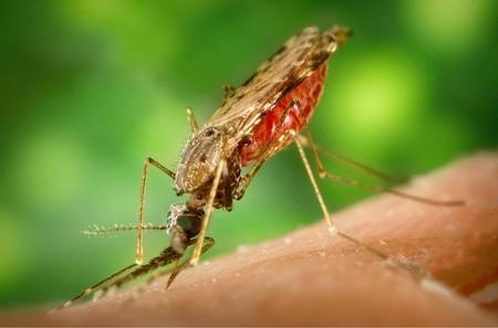 Mosquito 1016254 960 720